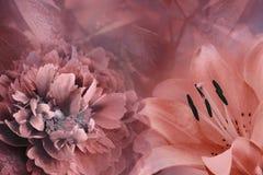 Blom- bakgrund av liljan och pionen Blommar närbild på en röd bakgrund vita tulpan för blomma för bakgrundssammansättningsconvolv royaltyfri bild