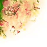 Blom- bakgrund av rosor Royaltyfria Foton