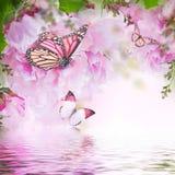 Blom- bakgrund av rosor Royaltyfri Foto