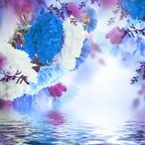 Blom- bakgrund av rosor Royaltyfri Bild