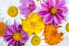 Blom- bakgrund av sommarblommor Royaltyfria Foton