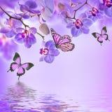 Blom- bakgrund av tropiska orkidér Royaltyfria Foton