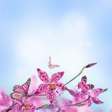 Blom- bakgrund av tropiska orkidér Arkivbilder