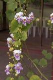 Blom- bakgrund av tropiska orkidér Arkivfoton