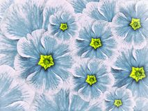 Blom- bakgrund av violetta blommor Vit turkos för blommor med ljust - blå mitt arkivbilder