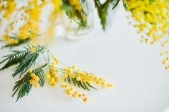 Blom- bakgrund: en filial av mimosan på en ljus bakgrund, copyspace för din text: hälsningkort, mellanrum, modell, bakgrund för Arkivfoton