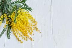 Blom- bakgrund: en filial av mimosan på en ljus bakgrund, copyspace för din text: hälsningkort, mellanrum, modell, bakgrund för Arkivfoto