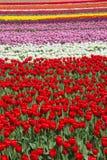 Blom- bakgrund för abstrakt färgmodell royaltyfri bild