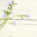 Blom- bakgrund för delikat sommar Royaltyfri Bild
