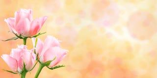 Blom- bakgrund för ferienatur Fotografering för Bildbyråer