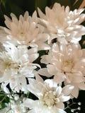 Blom- bakgrund f?r foto H fotografering för bildbyråer