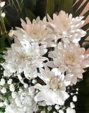 Blom- bakgrund f?r foto H?rlig abstrakt closeup av vita blommor fotografering för bildbyråer