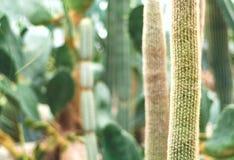 Blom- bakgrund för kaktus av gjord suddig monokrom sammansättning grön living arkivbild
