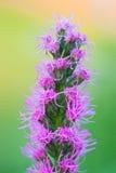Blom- bakgrund för konst med rosa flowe Arkivbilder
