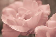 Blom- bakgrund för konst med rosblomman Royaltyfri Fotografi