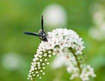 Blom- bakgrund för konst med vit flowe Arkivfoton