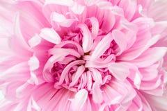 Blom- bakgrund för naturlig makro arkivbilder