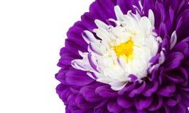 Blom- bakgrund för naturlig makro royaltyfri foto