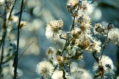 Blom- bakgrund för naturlig makro fotografering för bildbyråer