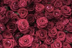 Blom- bakgrund för rosor som är floristry Arkivbild