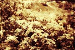 Blom- bakgrund för tappning fotografering för bildbyråer