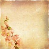 Blom- bakgrund för tappning Royaltyfri Bild