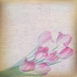 Blom- bakgrund för tappning. Royaltyfri Fotografi