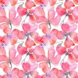 Blom- bakgrund för vattenfärg med röda vallmo Royaltyfri Fotografi