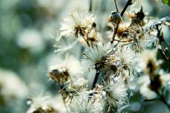 Blom- bakgrund för naturlig makro Royaltyfria Bilder
