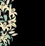 Blom- bakgrund. försiktig blommaliljamodell. Fotografering för Bildbyråer