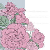 Blom- bakgrund med hand drog rosa rosor. Vektor EPS10. Fotografering för Bildbyråer