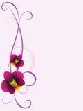 Blom- bakgrund med orkidéblommor, designbeståndsdel Royaltyfria Foton