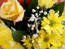 Blom- bakgrund med teros- och gulingkrysantemum Arkivbild