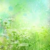 Blom- bakgrund med vattenfärgcamomilen vektor illustrationer