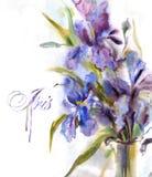 Blom- bakgrund med vattenfärgirisen Royaltyfria Bilder