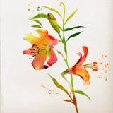 Blom- bakgrund med vattenfärgliljan Arkivfoto