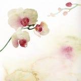 Blom- bakgrund med vattenfärgorchiden Royaltyfria Bilder