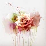 Blom- bakgrund med vattenfärgron Royaltyfri Bild