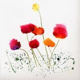 Blom- bakgrund med vattenfärgvallmor Fotografering för Bildbyråer