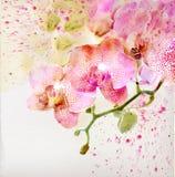 Blom- bakgrund med vattenfärgorchiden Royaltyfria Foton