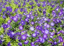 Blom- bakgrund på botaniska trädgården Arkivbild