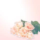 Blom- bakgrund: rosor som isoleras över vit bakgrund Arkivbilder
