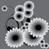 blom- bakgrunder Arkivfoto