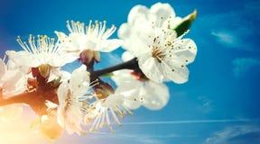 Blom- bakgrunder för vår Royaltyfri Foto