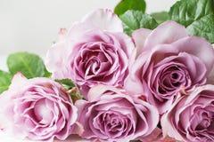 Blom- bakgrundstextur för purpurfärgade rosor Storen specificerar! lycklig moder s för dag red steg arkivfoto