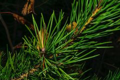 Blom- begrepp för höst på en oskarp mörk bakgrund Royaltyfri Foto