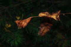 Blom- begrepp för höst på en oskarp mörk bakgrund Arkivbild