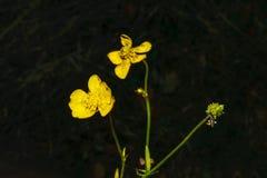Blom- begrepp för höst på en oskarp mörk bakgrund Royaltyfria Bilder