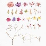 Blom- beståndsdeluppsättningar för vattenfärg arkivfoto