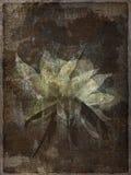 blom- bevekelsegrund för konst Royaltyfri Fotografi